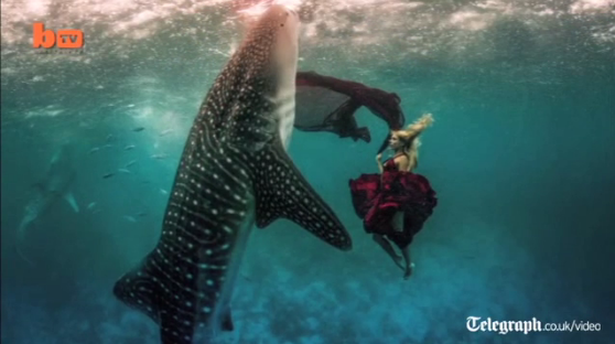 Model swims with Whale Shark in unique photo-shoot